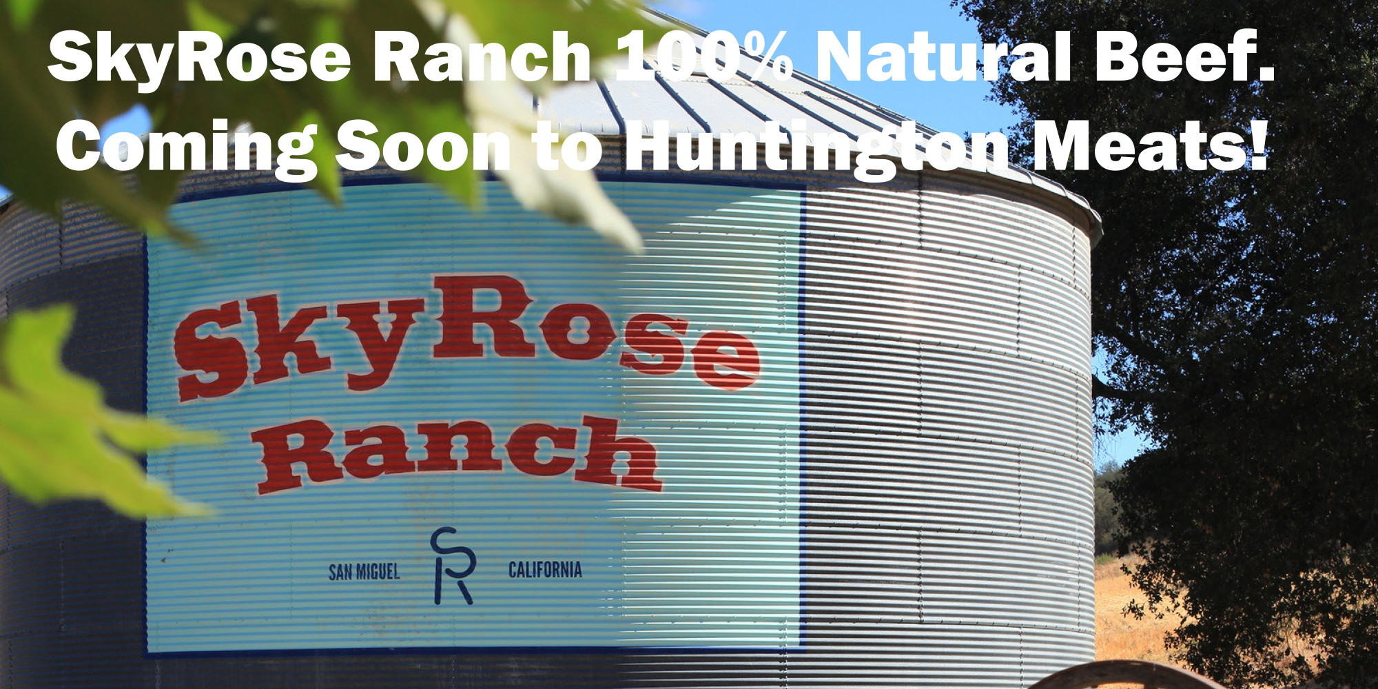 skyrose ranch 2